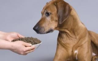 Выбор кормов для собак премиум класса: виды и особенности, список и цены, полезные советы