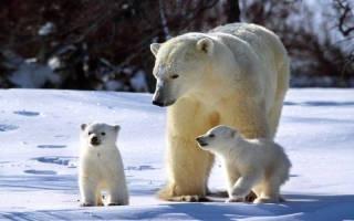 Самые заботливые представители животного мира