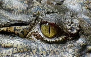 Фотограф выкинул на свалку в Сочи мёртвых питона и крокодила