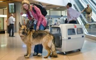 Как перевозить животных в транспорте