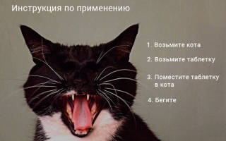 Как дать таблетку кошке: лучшие способы