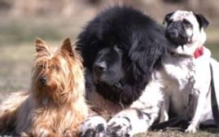 Французским псам запретили громко лаять