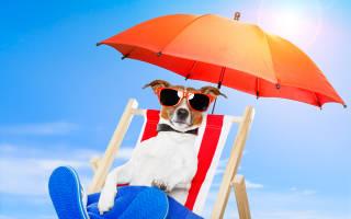 Как защитить собаку или кошку от солнца