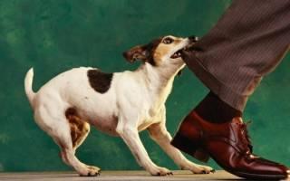 Что поможет отучить собаку бросаться на людей и машины