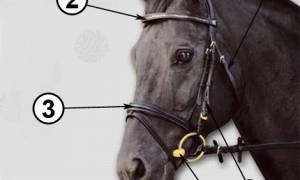 Амуниция для лошадей