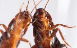 Ловушки для тараканов: виды, какие из них можно сделать своими руками, отзывы, обзор популярных моделей