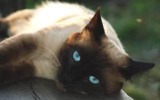 Капли для кошек и котов гестренол, дозировка, инструкция