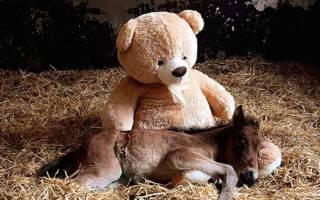 Животные, обнимающие мягкие игрушки во сне