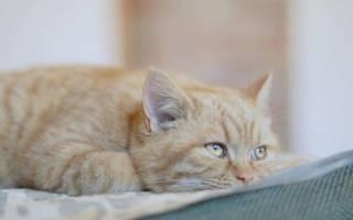 Пиометра у кошек — дигностика, причины, симтомы и лечение, послеоперационный период