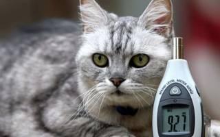 Какие кошки занесены в Книгу рекордов Гиннеса