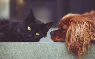 Кошатник или собачник: что расскажет о вашем характере выбор питомца — Zoolog.guru