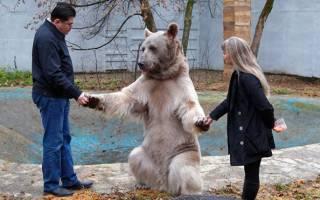 Как живет медведь в обычной семье — фото