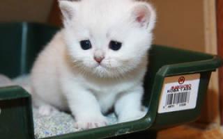 Как помочь коту, который не может сходить в туалет по-маленькому: что делать и основные причины