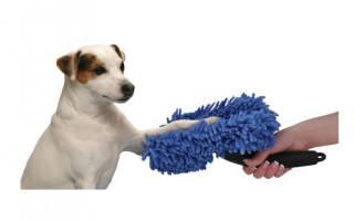 Как мыть лапы собаке после прогулки — чем можно, что делать, если собака этого не любит