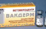 Вакцинный препарат вакдерм для кошек: инструкция, применение, описание и отзывы