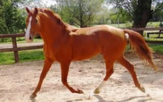 Описание разных пород лошадей, классификация с названиями и фотографиями