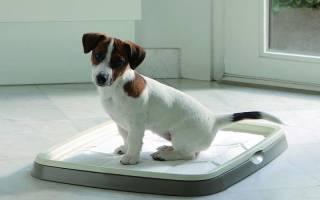 Как приучить щенка к пелёнке: особенности приучения собаки ходить в туалет