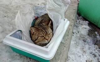 В Индиана спасли котёнка, которого выбросили в мусорном мешке