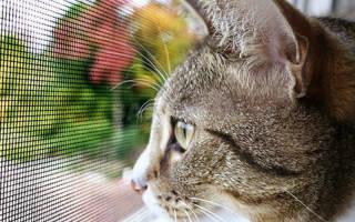 Как я обезопасил балкон для кошки