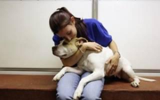 Эвтаназия в домашних условиях: причины усыпления, как усыпить собаку самому
