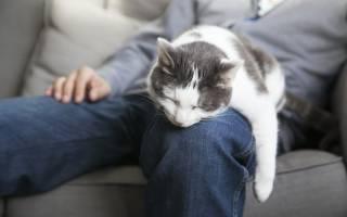 Почему кошки спят в ногах у человека: лучшие версии
