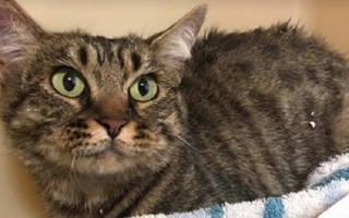 В Канаде спасли кошку которую замотали скотчем и выкинули на улицу
