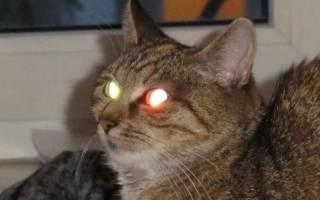 У кошек в темноте светятся глаза, как и почему это происходит