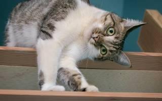 Что хочет сказать ваш питомец: кошачий язык тела
