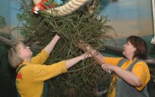 В зоопарке Берлина животным отдали на съедение новогодние ёлки
