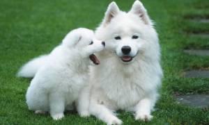Почему у собаки холодные лапы
