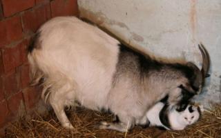 Трогательная дружба между животными (часть 2)