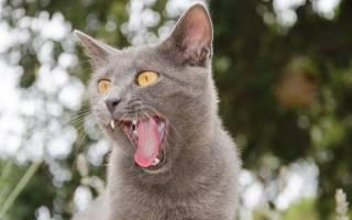Почему кошки высовывают кончик языка: причины