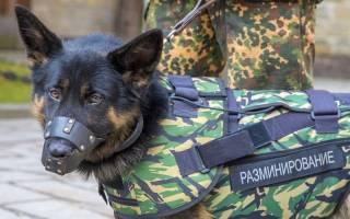 Самые важные собачьи профессии