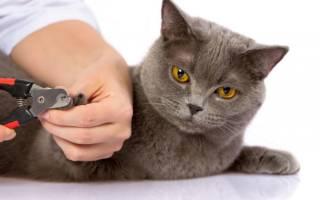 Как подстричь когти коту в домашних условиях — пошаговая инструкция