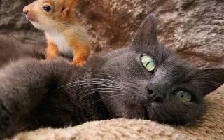 Необычные детеныши, которые стали приемными детьми самых обычных кошек