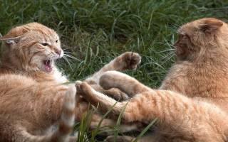 Как ругаются кошки: подборка забавных фото
