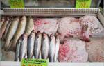 В Крыму выловили тропических рыбок