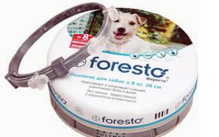 Ошейник от клещей Форесто: активные вещества и принцип действия Foresto, рекомендации по использованию, отзывы