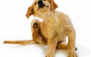 Таблетки от клещей Бравекто для собак: принцип действия, отзывы ветеринаров, инструкция по применению