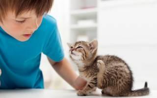 Как вывести блох у котенка в домашних условиях безопасными способами