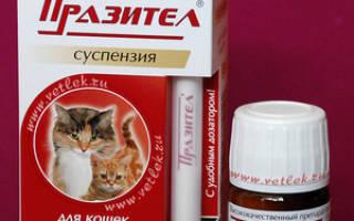 Суспензия празител для котят и кошек: основные свойства, инструкция по применению