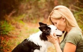 Интересные факты о собаках: 5 физиологических особенностей