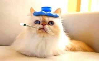 Лекарства для кошек от глистов: препараты, уколы и суспензии против паразитов