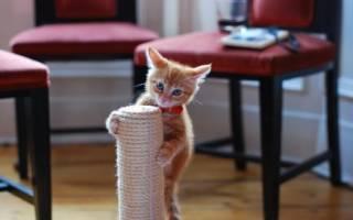 Как приучить кошку к когтеточке — взрослую, котёнка, что можно использовать