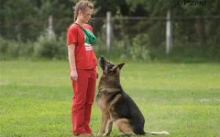 Список основных команд для дрессировки в домашних условиях и как научить им собаку