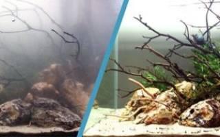 Почему в аквариуме с рыбами мутнеет вода