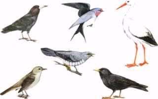 Какие перелетные птицы обитают на Украине: виды, картинки с названиями