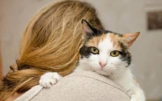 Что означают странные фразы владельцев котов