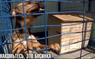 Иностранный футбольный болельщик собирается привезти на родину найденную им собаку в Сочи