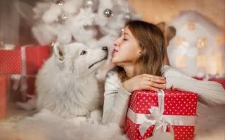 Идеи новогодних подарков для питомцев